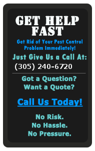 Call Pest Control for Coral Gables, FL